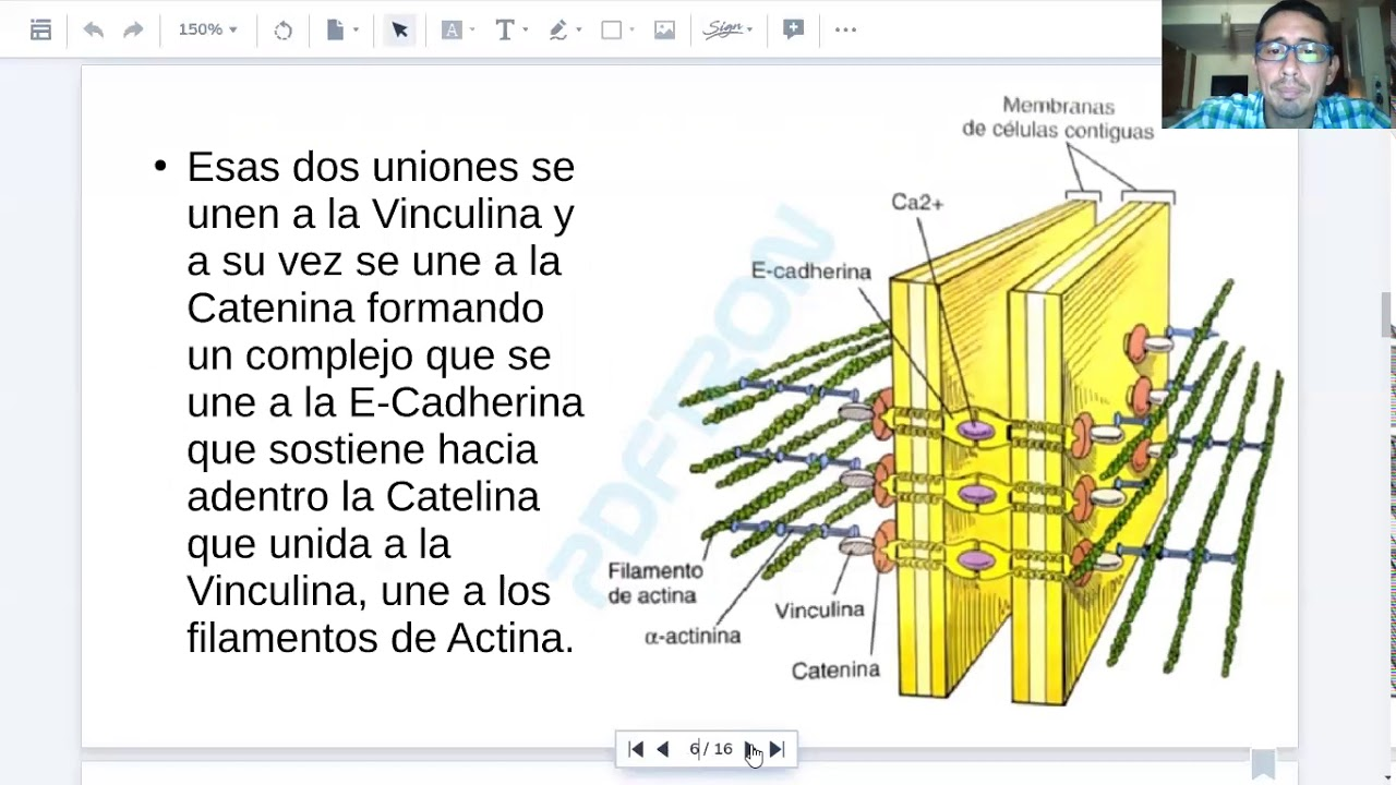 Microclase 3 Unidad II (Mofosiología Aplicada Viedma)