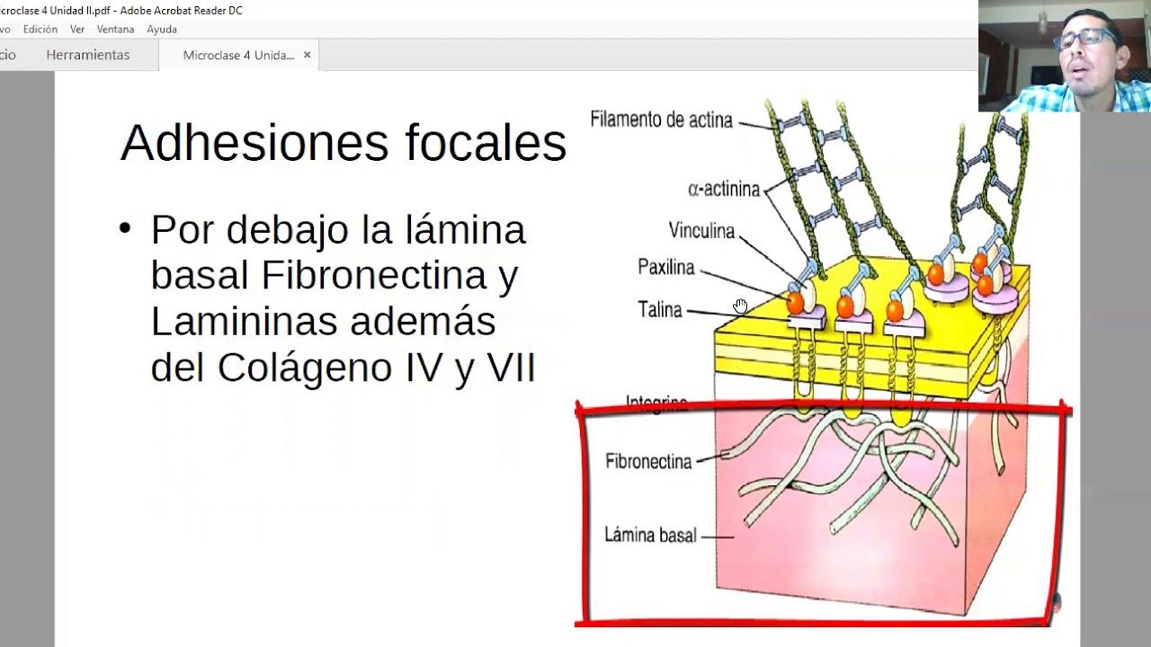Microclase 4 Unidad II (Mofosiología Aplicada Viedma)