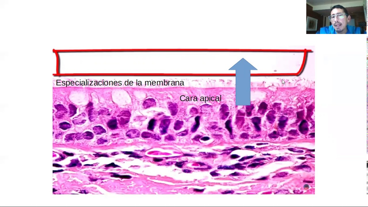 Microclase 1 Unidad II Tejido Epitelial (Mofosiología Aplicada Viedma)