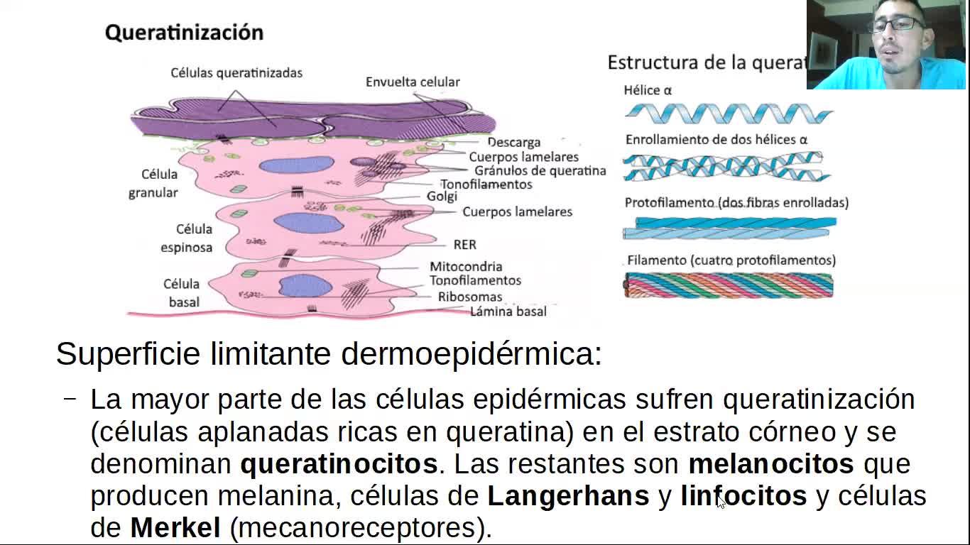 Microclase 1 Unidad III Piel (Mofosiología Aplicada Viedma)