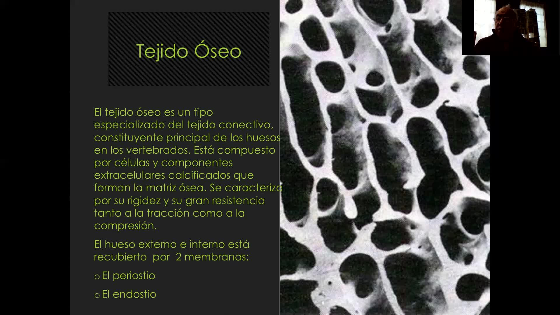 Microclase 1 Unidad IIi Tejido cartilaginoco y óseo (Morfofisiología Aplicada Viedma)