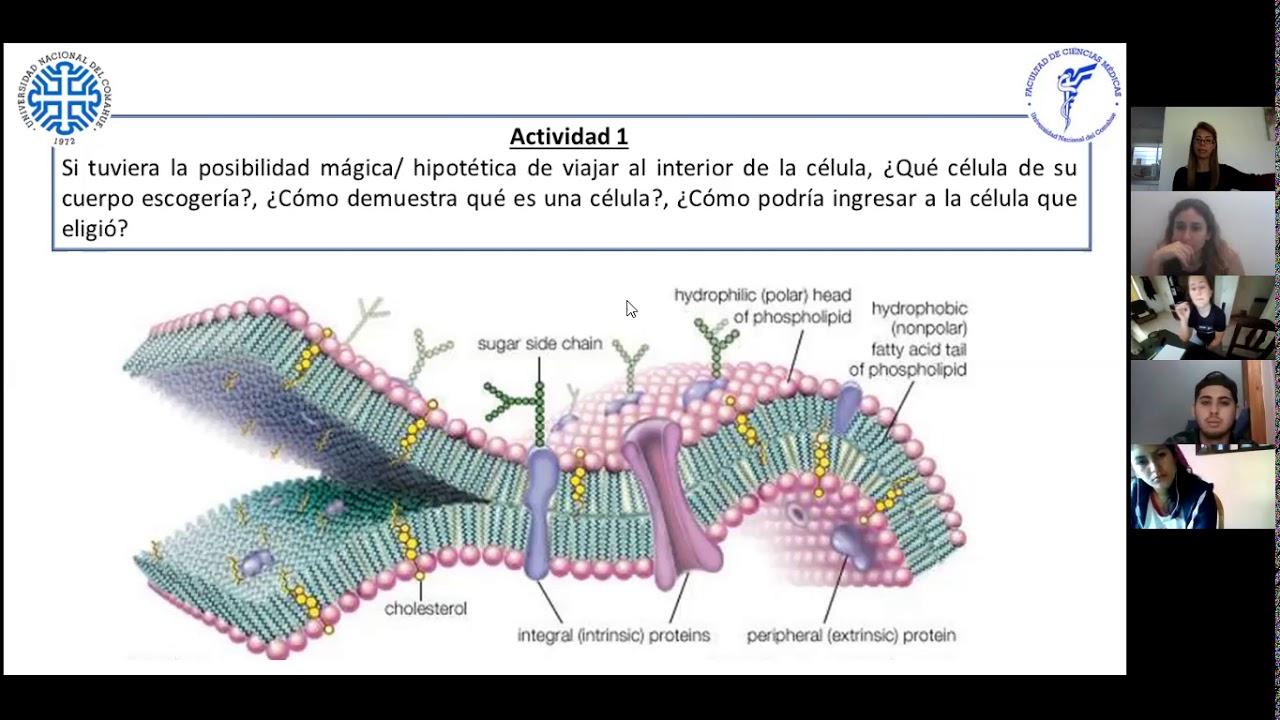 IBH FACIMED- CO: TP 2 Metabolismo I- Membrana y Transporte CE