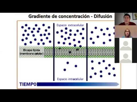 IBH FACIMED- CO: TP 2 Metabolismos I- Membrana y Transporte C3