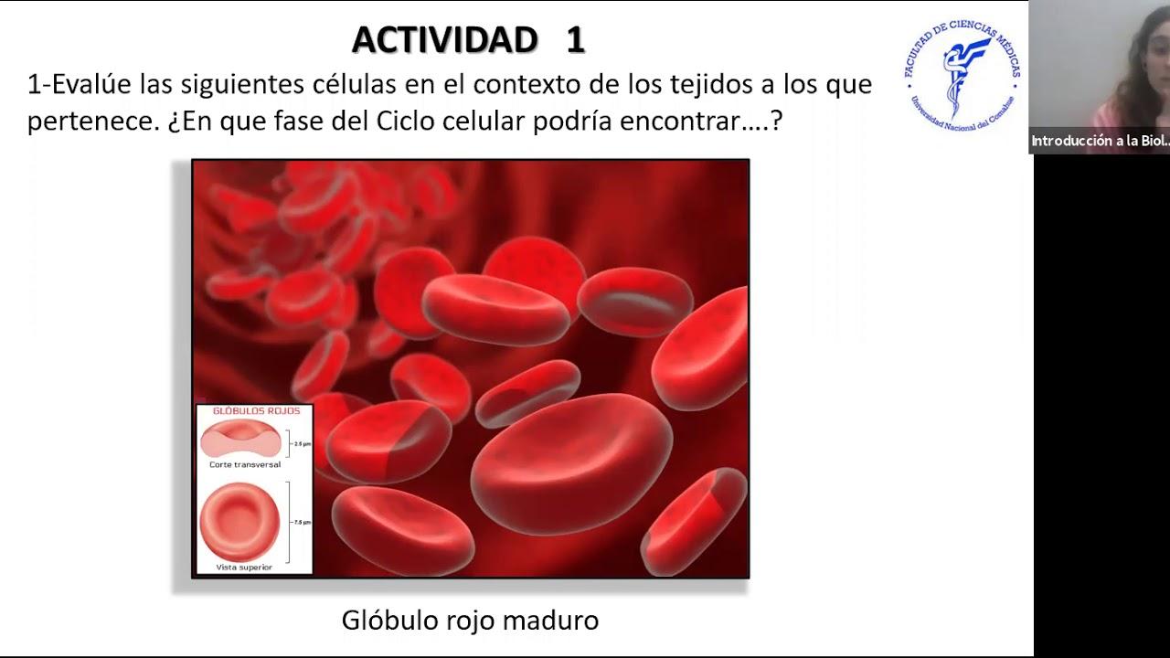 IBH FACIMED- CO: TP 5 Ciclo Celular CD