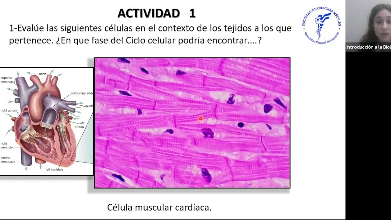 IBH FACIMED- CO: TP 5 Ciclo Celular C5