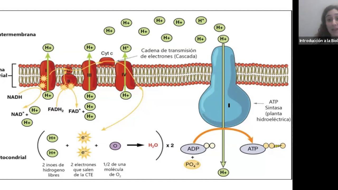 IBH FACIMED- CO: TP 4 Metabolismo III C5