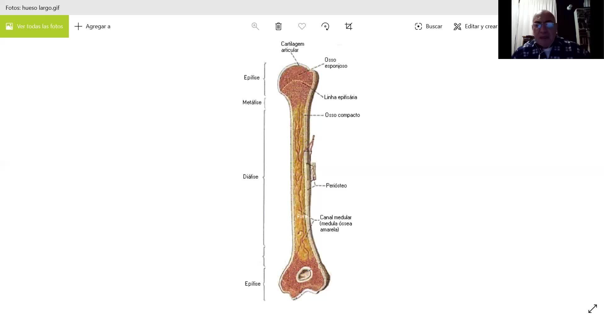 Microclase 1 Unidad III Estructura y Osificación (Morfofisiología Aplicada - Viedma)