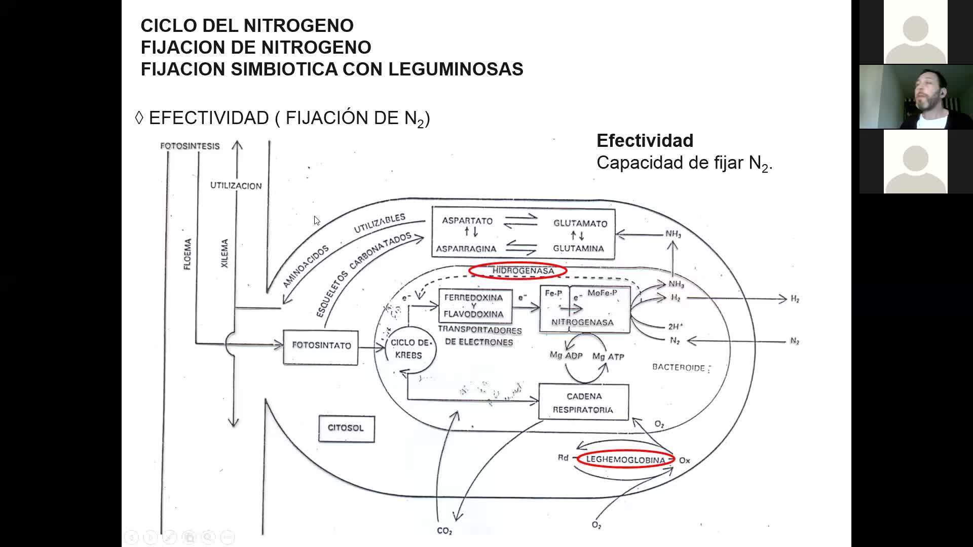Microbiologia agricola UT13 Parte 6