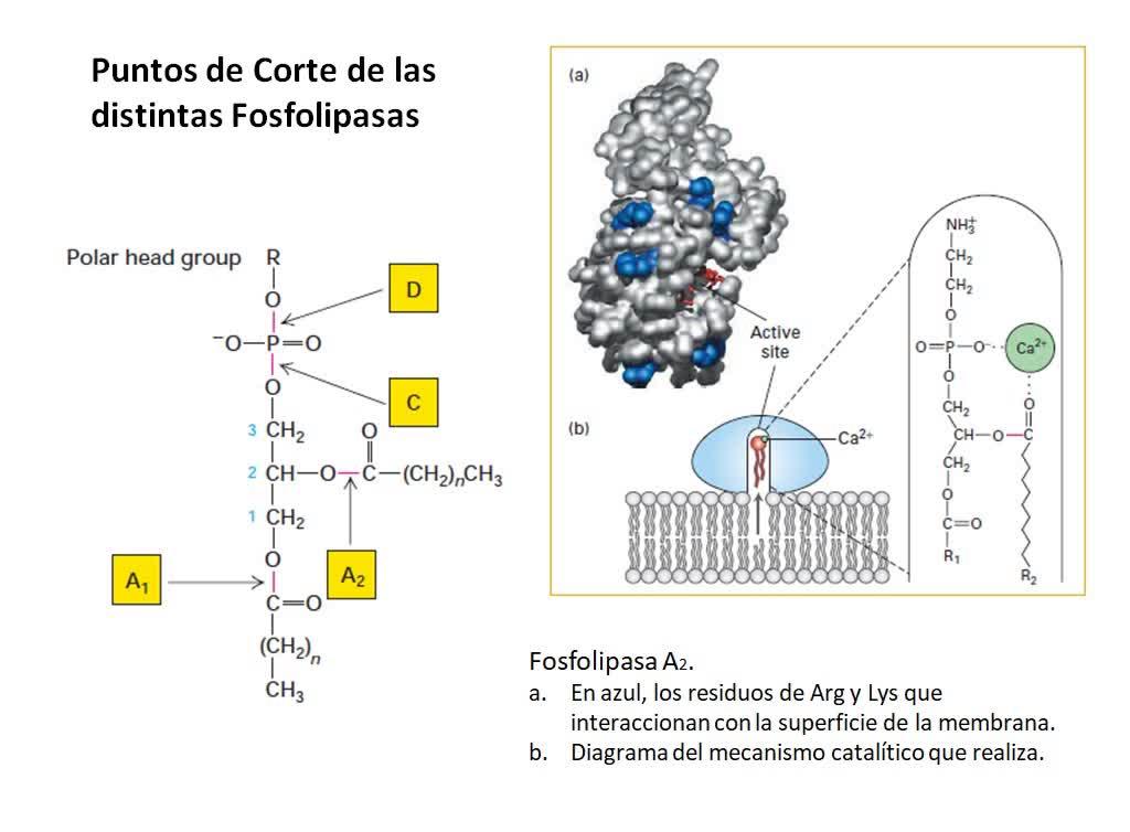 LITA-Bioqca-Simes-Membranas1