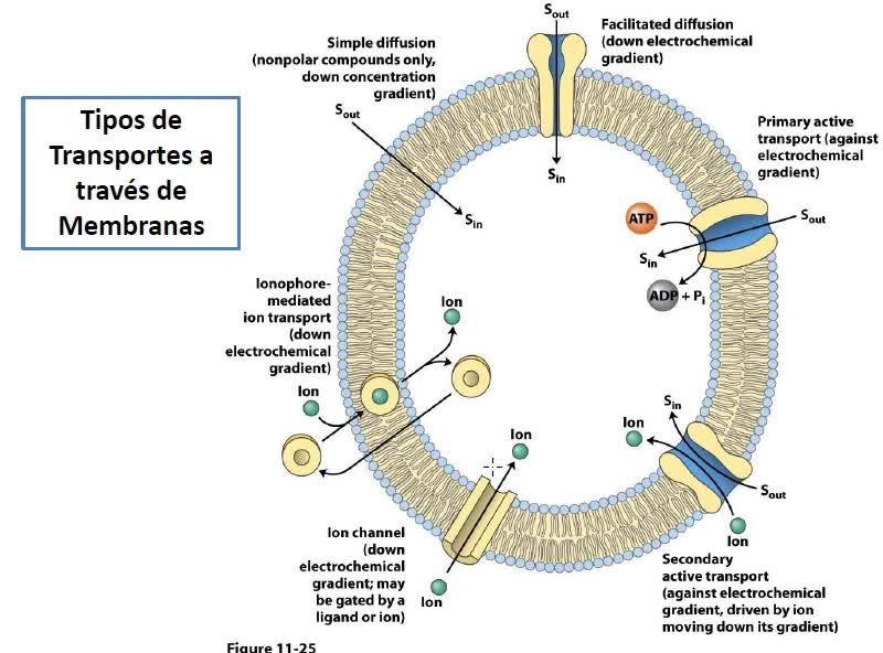 LITA-Bioqca-Simes-Membranas2
