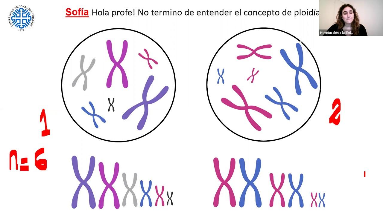 IBH FACIMED- CO: TP9 Meiosis I C5