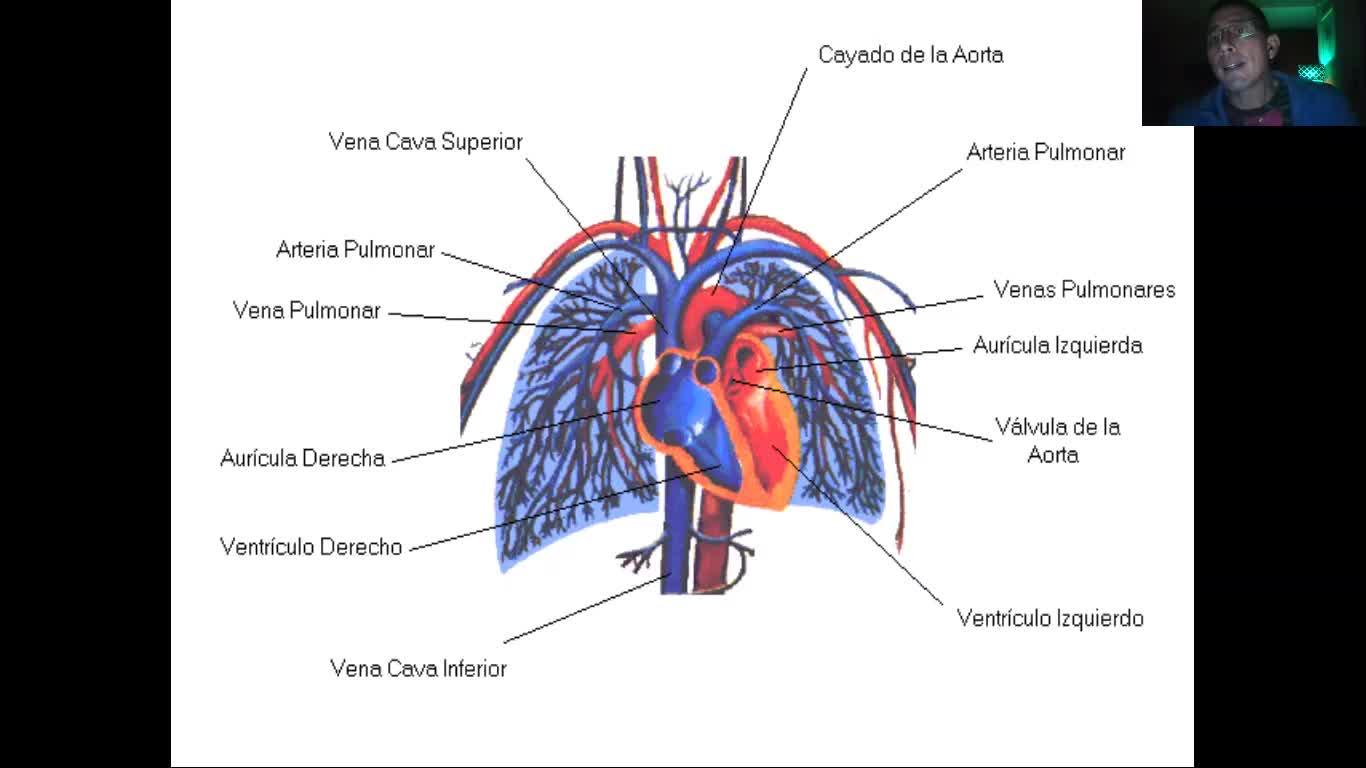 Microclase 1 Unidad IV Introducción al Aparato Circulatorio