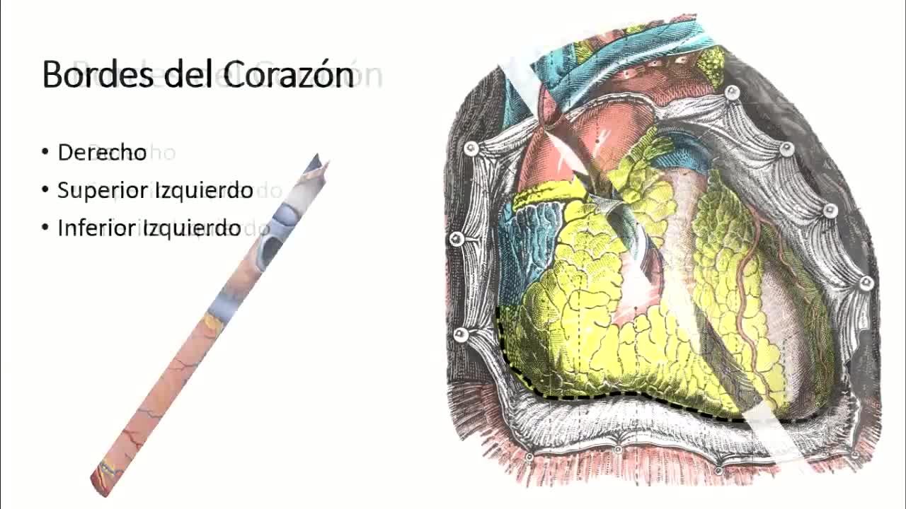 Microclase 2 Unidad IV Configuración Externa del Corazón Med. Carlos Andres Garcia