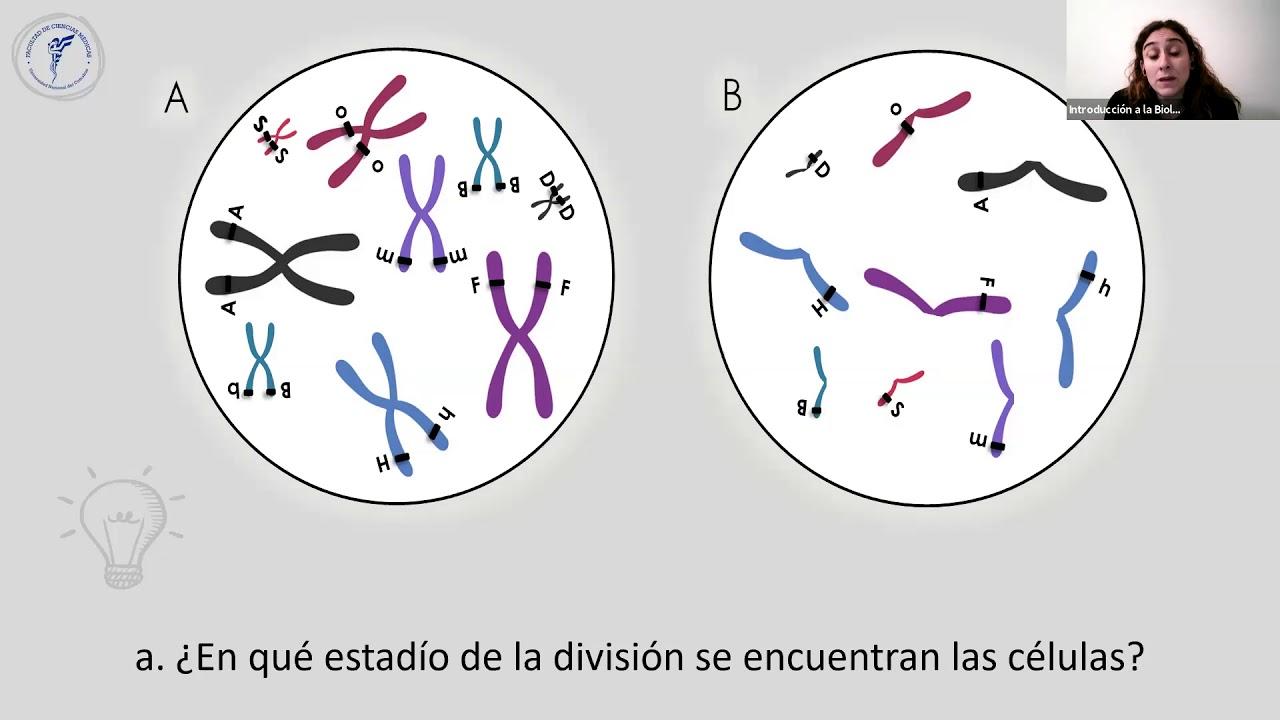 IBH FACIMED- CO: TP10 Meiosis II C5