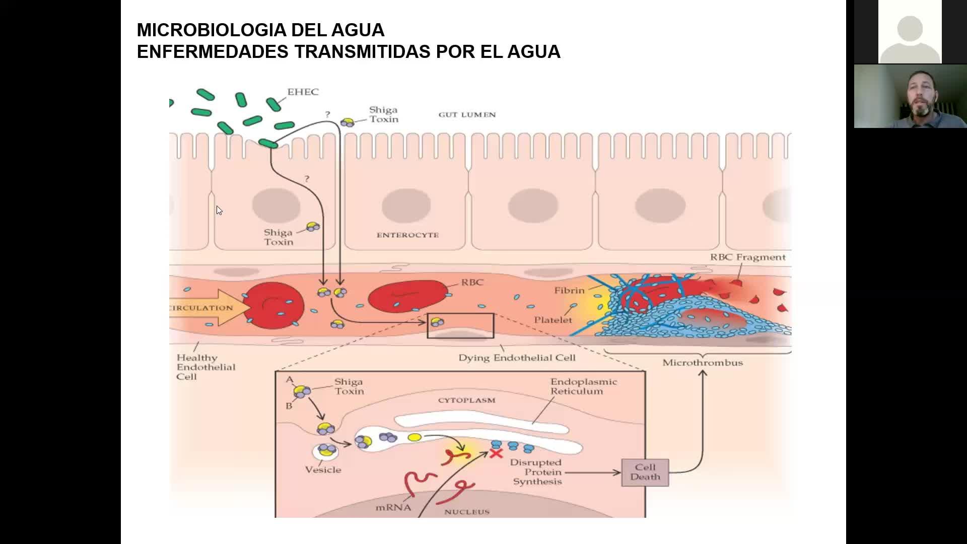 Microbiologia agricola UT17 Parte 3