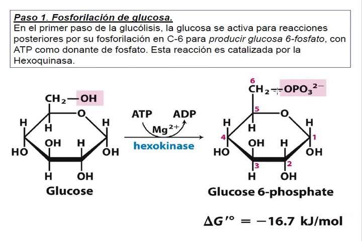 LITA-Bioqca-Simes-Glucolisis1