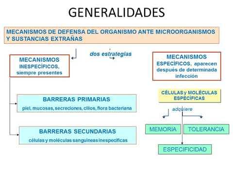 Microclase 1 Unidad IV Sistema Linfático e Inmunidad - Prof. Dr. Sergio Tamayo