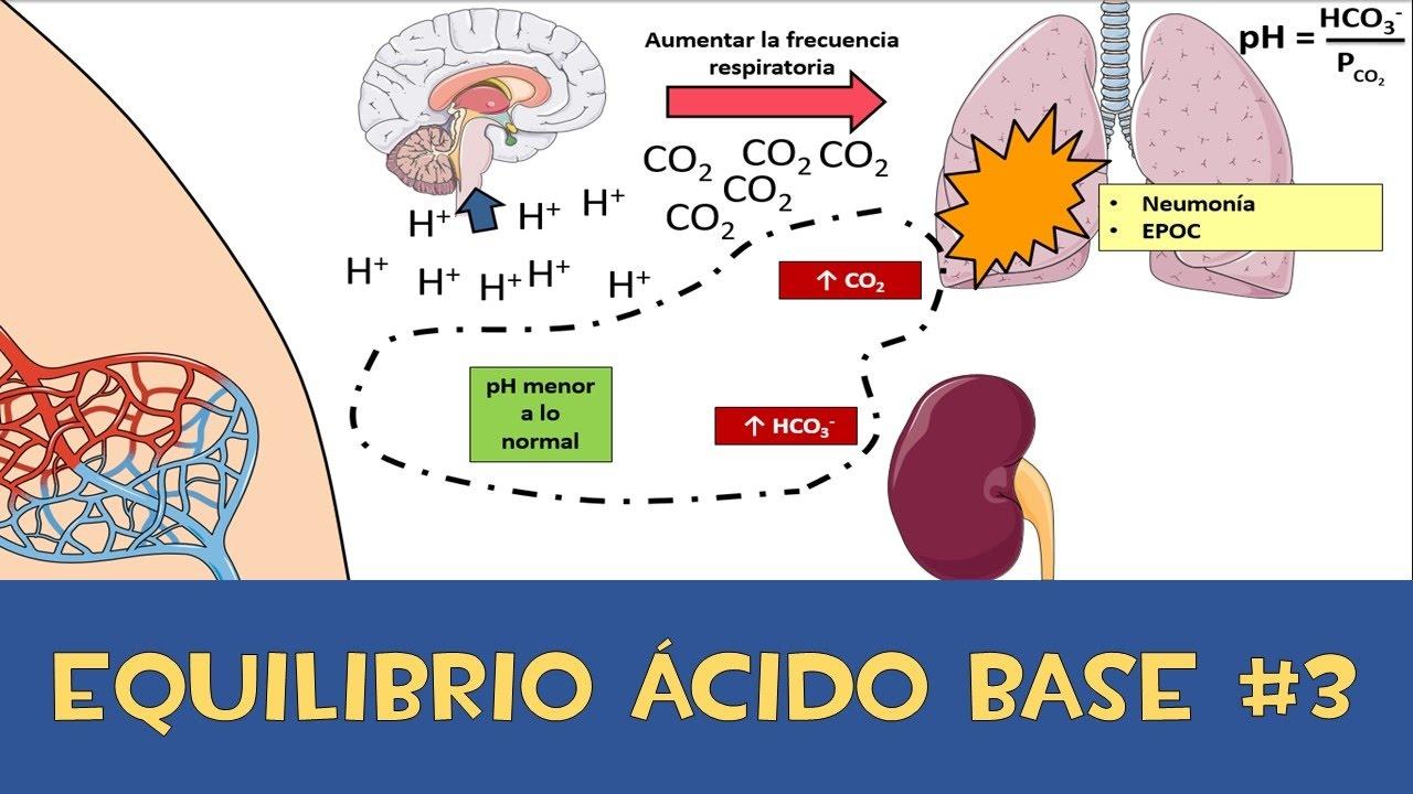 Microclase 3 Unidad IV Equilibrio ácido base - Amortiguador respiratorio y renal
