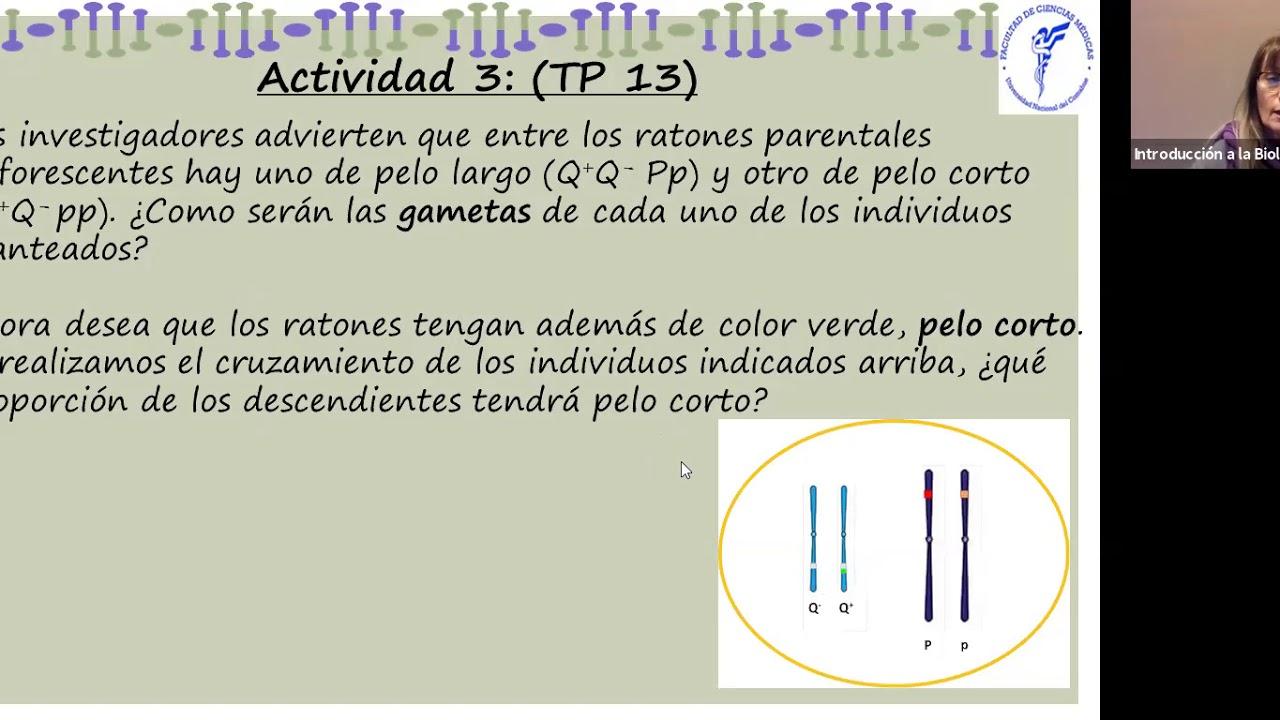 IBH FACIMED CO- TP 14 Genetica II CA