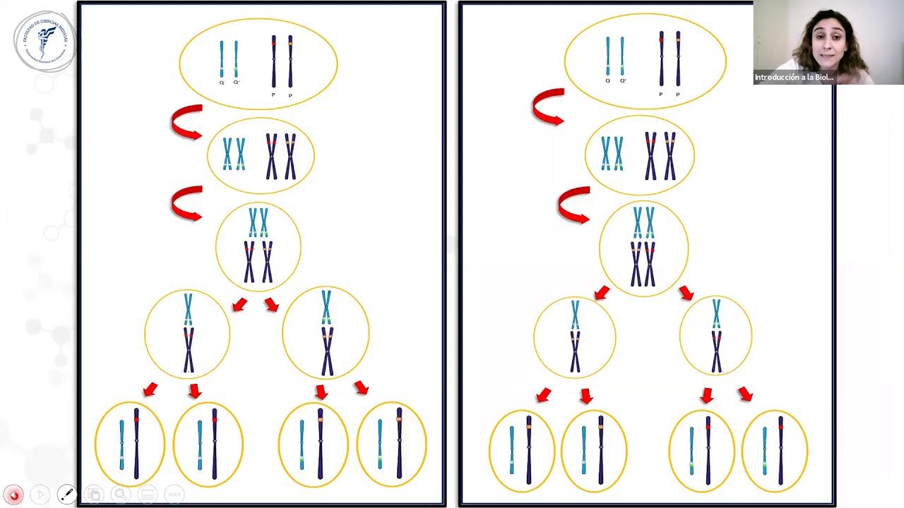 IBH FACIMED CO- TP 14 Genetica II CD