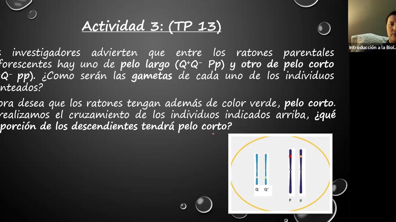 IBH FACIMED CO- TP 14 Genetica II C3