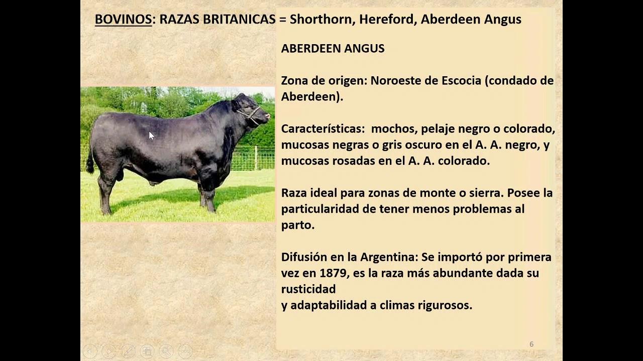 Razas animales de carnes rojas tradicionales