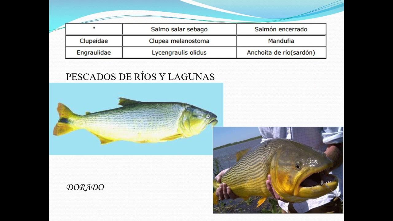 Productos de pesquera