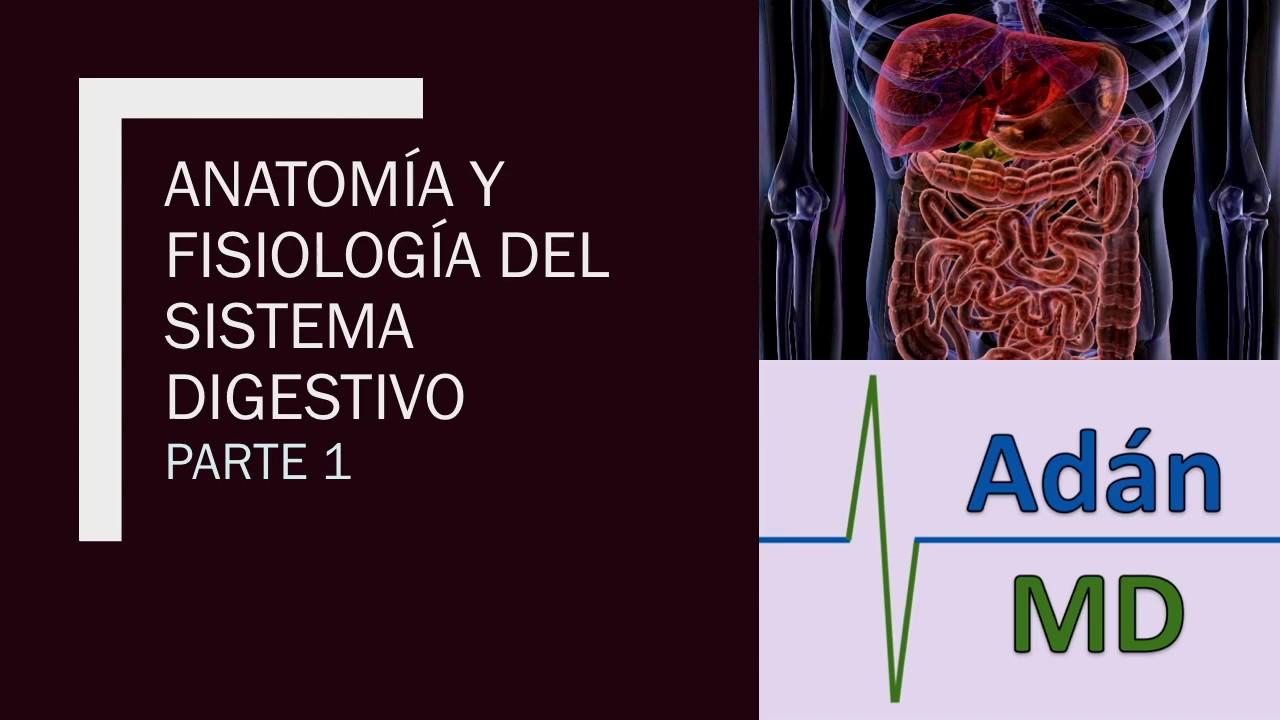 Microclase 1 Unidad V Funciones del Aparato Digestivo