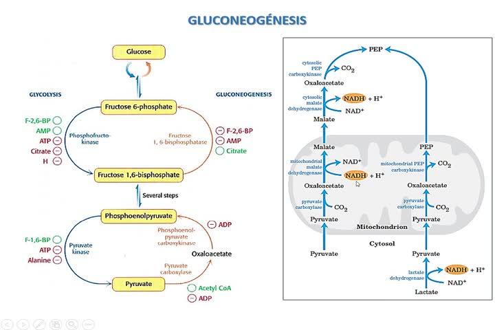 LITA-Bioq-Krebs Y Glioxilato 2020-1