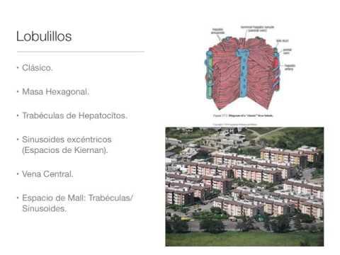 Microclase 7 Unidad V Histología Hígado y Páncreas