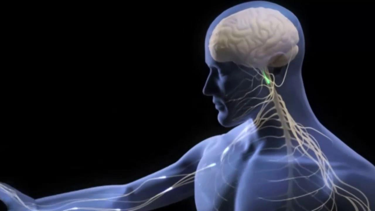 Vdeo ilustrativo, la Neurona y transmisin sinptica