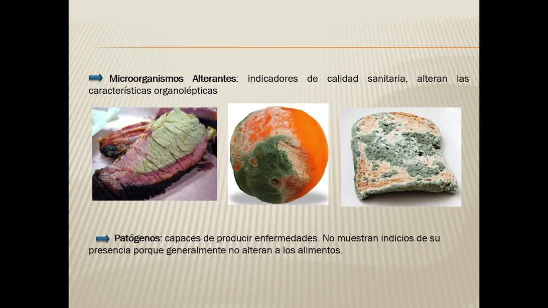 Introducción a la microbiología de los alimentos