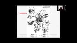 Clasificacin del Sistema Nervioso