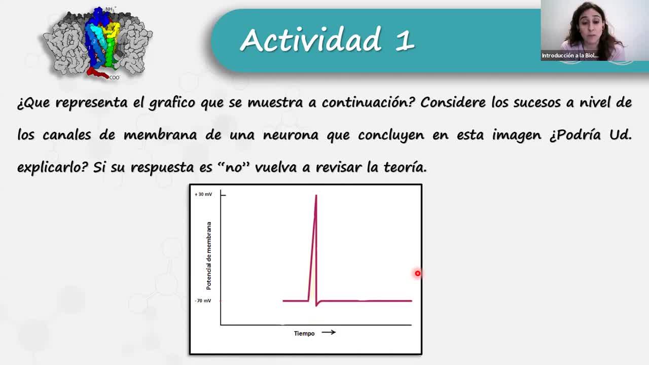 IBH FACIMED- CO: TP 17 Sist Nervioso 2