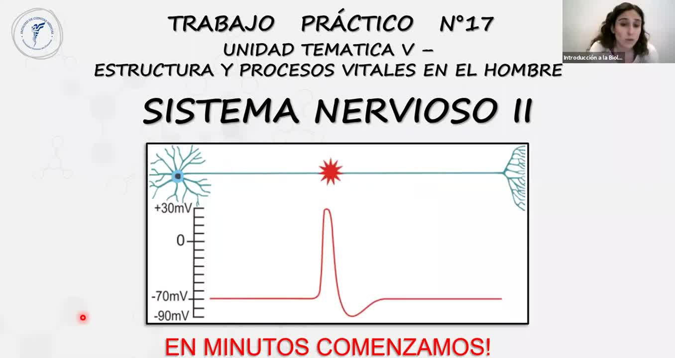 IBH FACIMED- CO: TP 17 Sist Nervioso 2