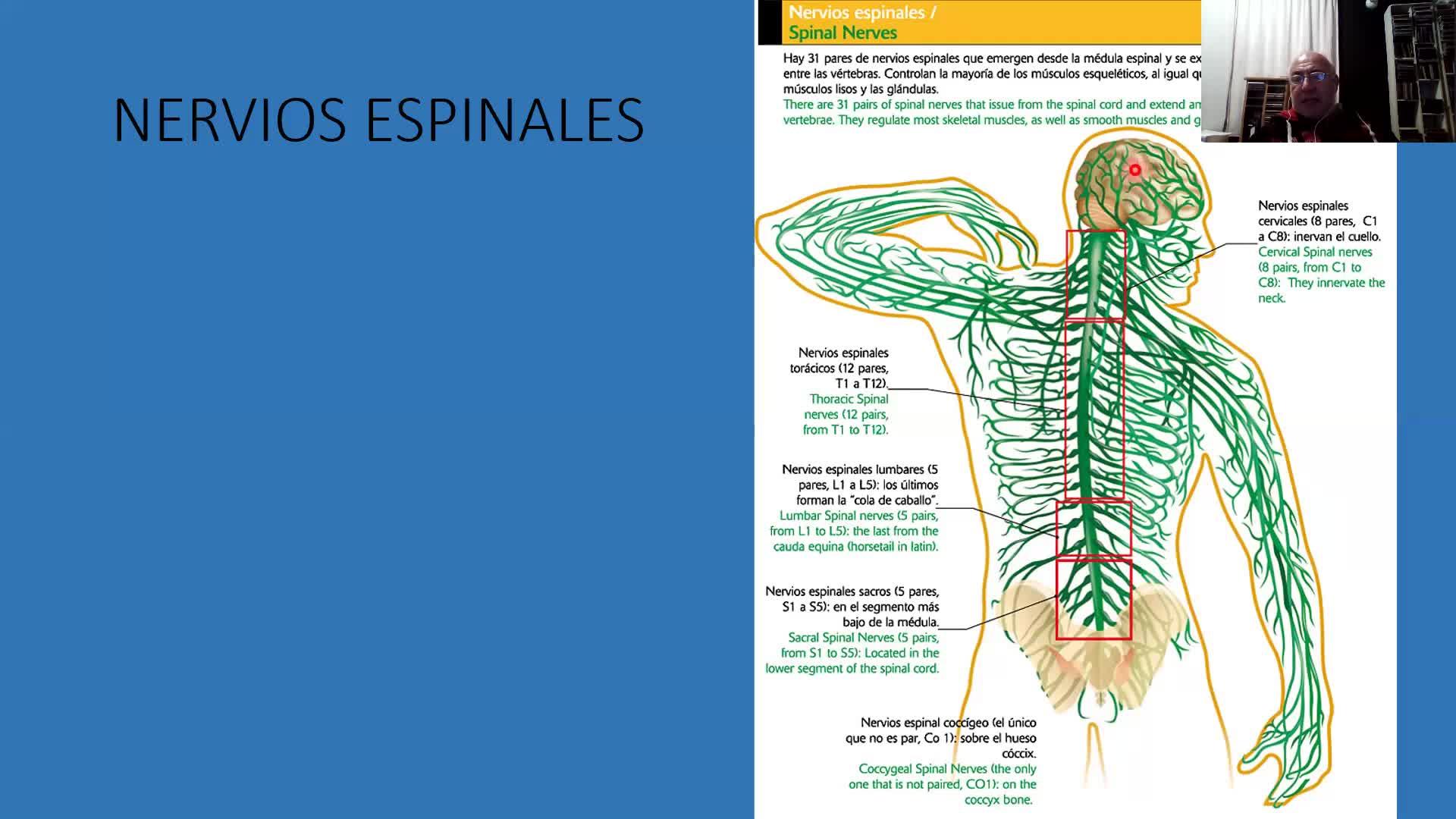 Pares espinales craneales y Médula