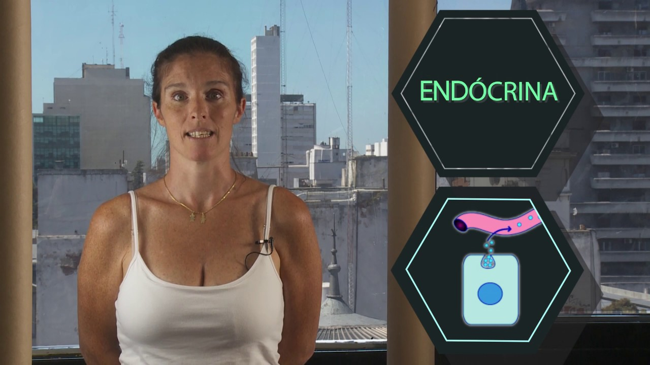 FISIOLOGA: Sistema Endocrino
