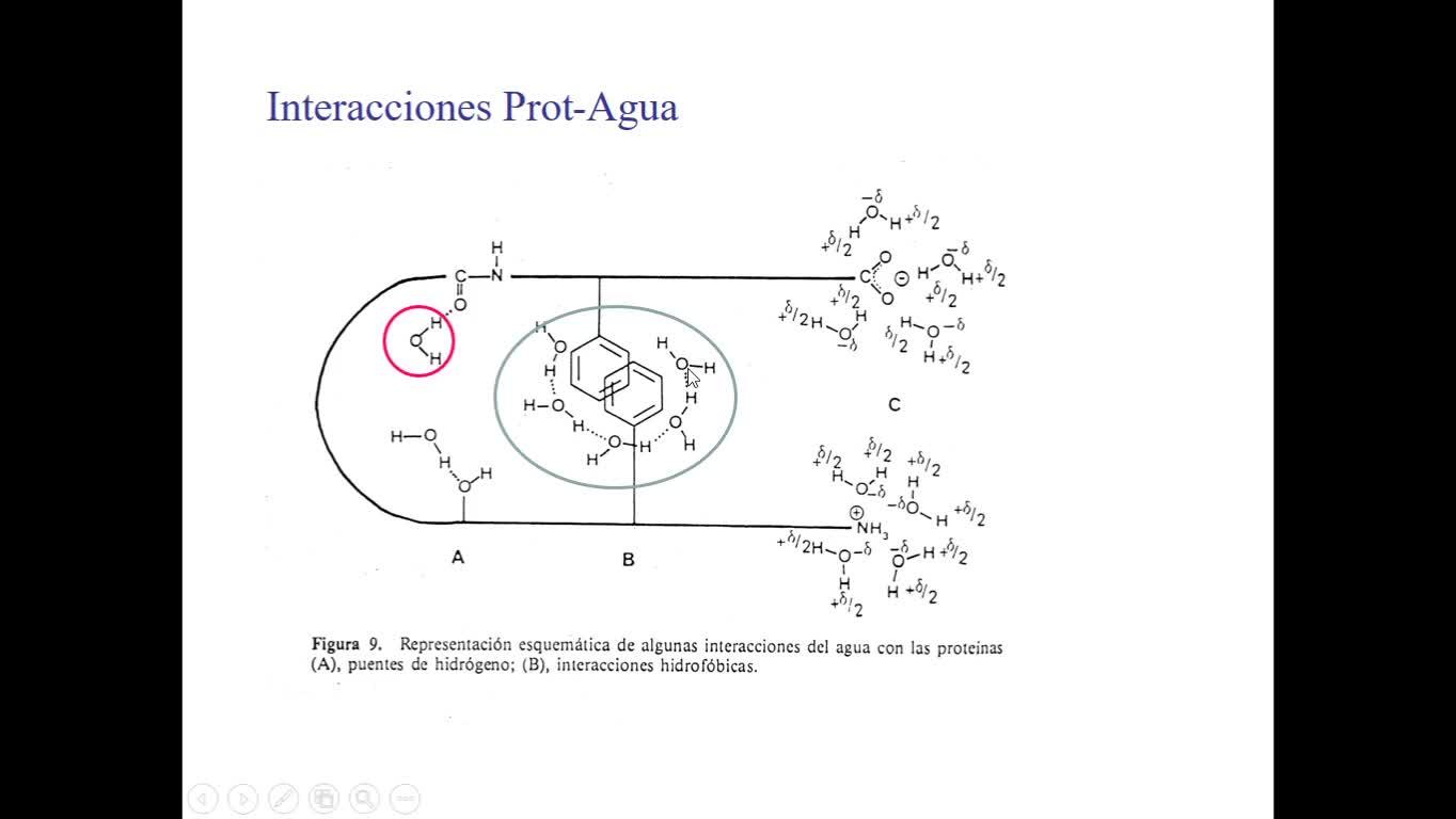 Proteínas 4 parte 1