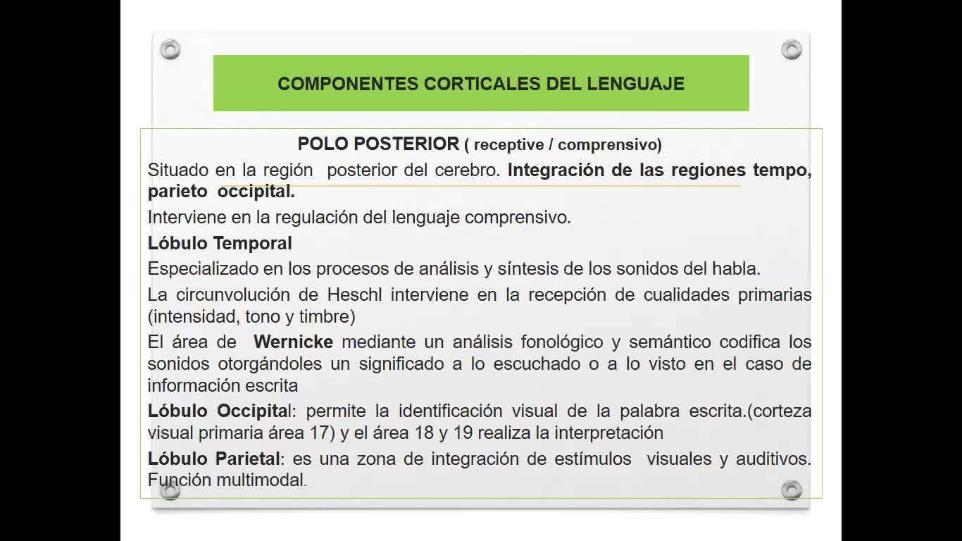 U6 NPS Lenguaje 2 Bases Neurobiológicas