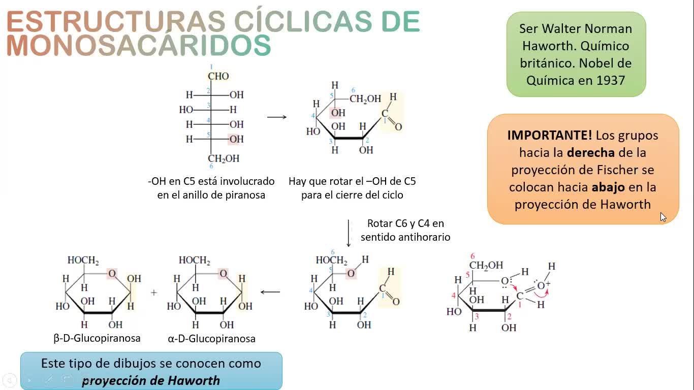 Clase Práctica (09-11-2020) - Carbohidratos Parte 1