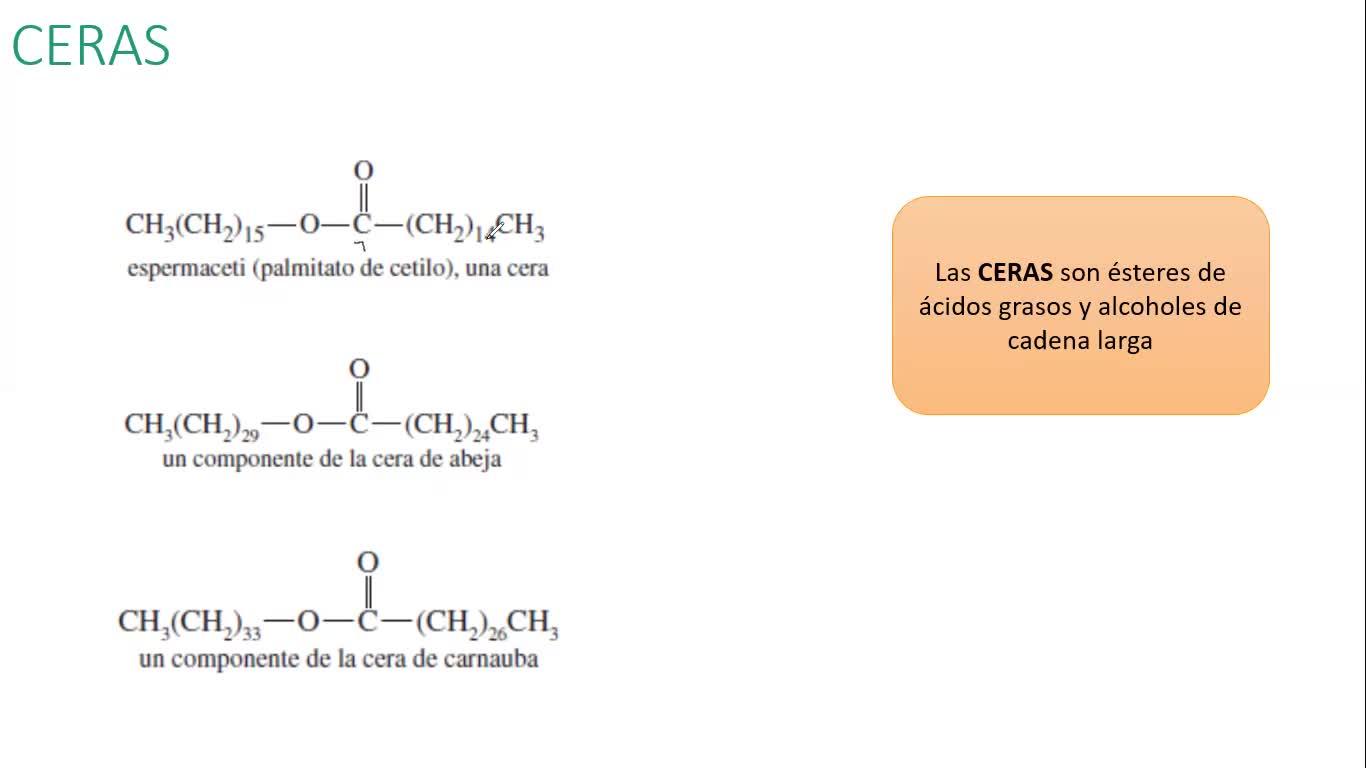 Clase Práctica (16-11-2020) - Lípidos