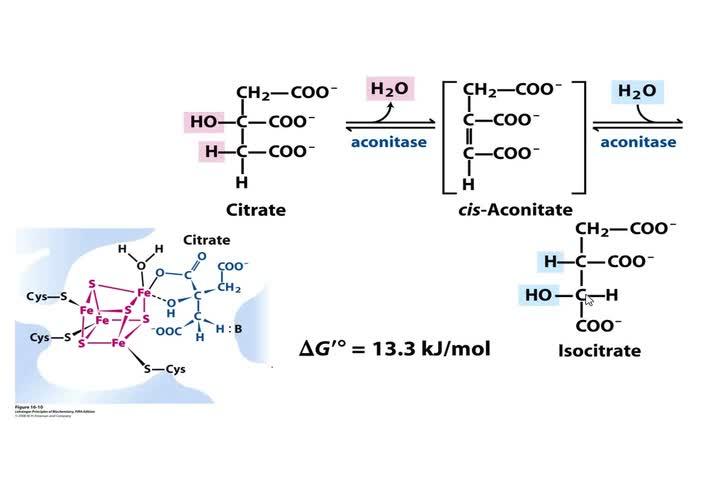 Bioqalim Glucólisis Gneogénesis Krebs Teoría 18-5-2021 Parte2-1