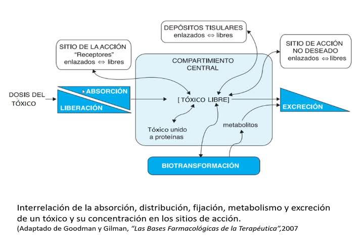 Metabolismo De Xenobióticos-1